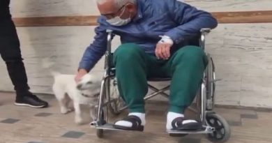 Dog waits outside Turkish hospital for days for owner